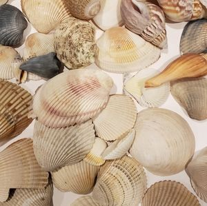 140 SEASHELLS FOR DECOR FROM AROUND THE WORLD